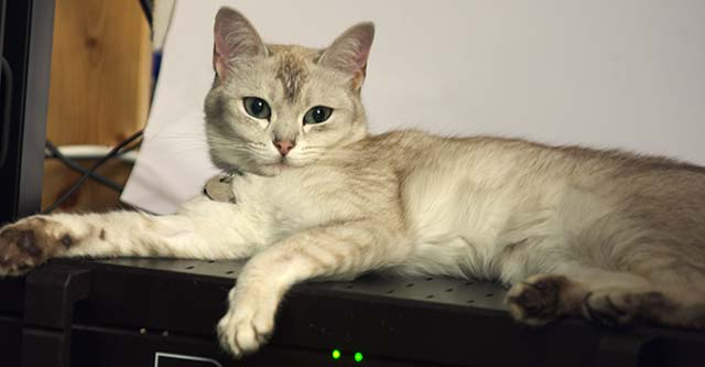 Darcy reclining on her amplifier
